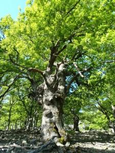 Магията на Дърветата на Самотраки превърната в къси разкази